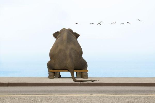 Как определить свои цели - Купить слона
