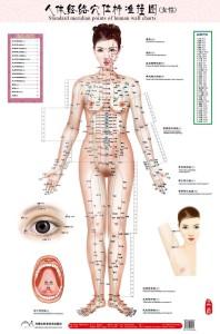Устройство тела девушки